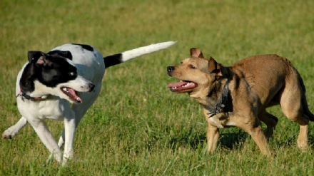 NICHELINO - Il Comune riqualifica larea cani di via Bengasi