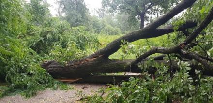 NICHELINO - Alberi abbattuti e allagamenti: i temporali continuano a fare danni