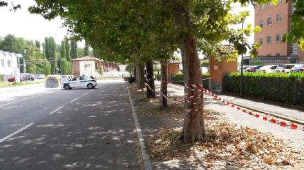 NICHELINO - Alberi pericolanti, la polizia locale chiude via Turati