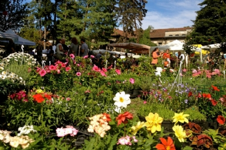 CARIGNANO - Il ritorno di «Fiori & Vini» sabato 11 e domenica 12 maggio