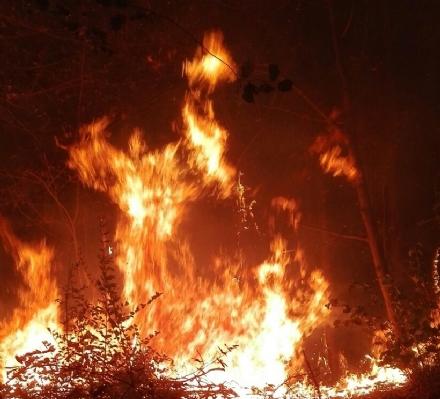 MONCALIERI - Paura in collina per alcune sterpaglie che hanno preso fuoco