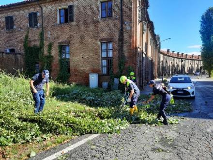MALTEMPO - Domenica ancora contrassegnata da alberi caduti e disagi. MIglioramenti da oggi