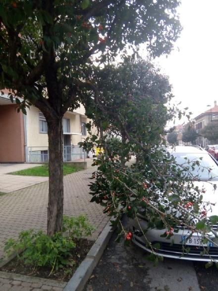 TROFARELLO - Proteste dei residenti in via Roma per gli alberi non potati