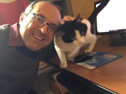 BRUINO - Il gattino scappa da casa e trova rifugio in Municipio: riconsegnato ai padroni