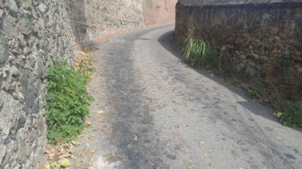 MONCALIERI - DAI LETTORI: Arbusti ed erba alta in strada Castelvecchio, la protesta dei residenti