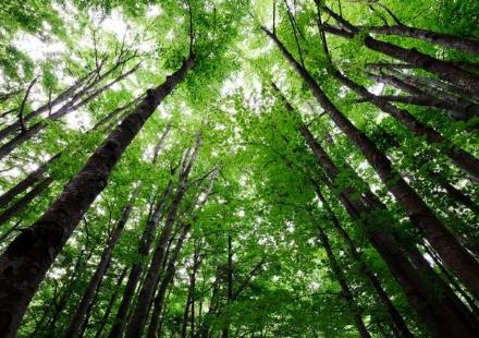 NICHELINO - Il Comune pianta un albero per ogni deceduto durante lepidemia
