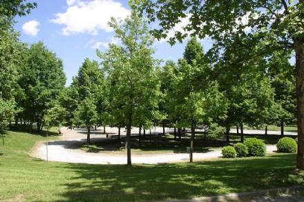 CARMAGNOLA - Il parco della Vigna chiude per labbattimento alberi