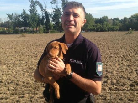 NICHELINO - Cagnolini trovati in un fossato dalla polizia municipale, si sospetta abbandono