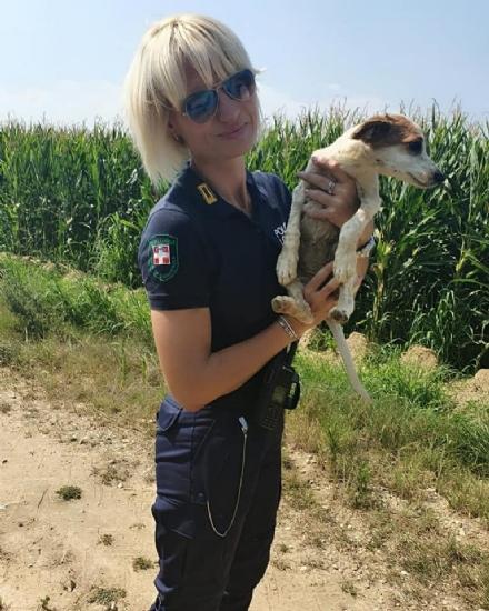 CARMAGNOLA - Abbandonano una cagnolina nei campi: salvata dalla polizia locale