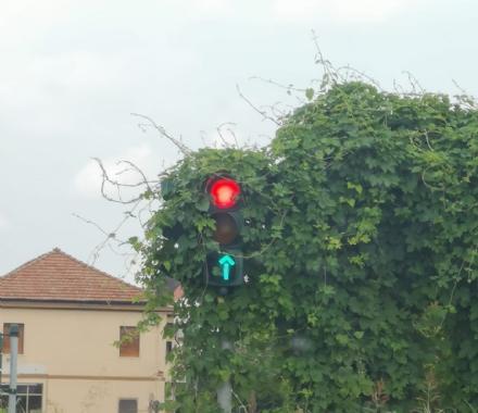 BEINASCO - Il semaforo nascosto dalledera: la denuncia dellopposizione