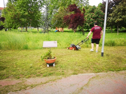 NICHELINO - Lassessore tifoso taglia lerba al parco Valentino Mazzola per il 4 maggio