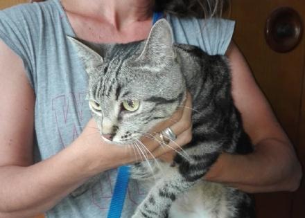 NICHELINO - Dopo la tragedia di via Juvarra, la gatta di casa è rimasta sola