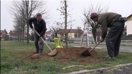 RIVALTA - Venticinque alberi nuovi nei giardini tra via Moriondo e via Togliatti