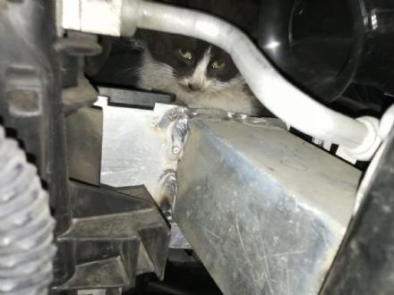 NICHELINO - Il gatto si infila nel cofano della macchina e per liberarlo arrivano vigili e pompieri