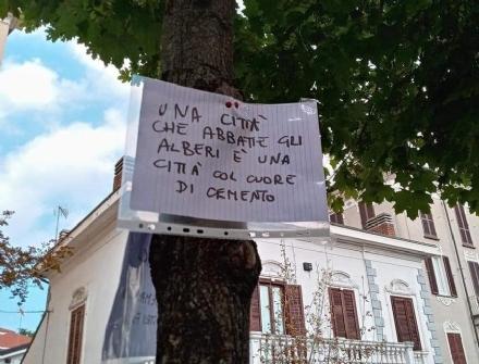 MONCALIERI - «Nessun abbattimento di alberi sani in Viale Porta Piacentina»