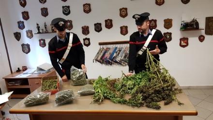 PIOSSASCO - Coltivavano droga al campo nomadi: tre arresti e 17 chili di marijuana sequestrati