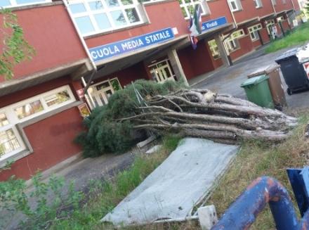 BEINASCO - Crolla un albero allinterno della scuola Vivaldi: dura posizione del centrodestra