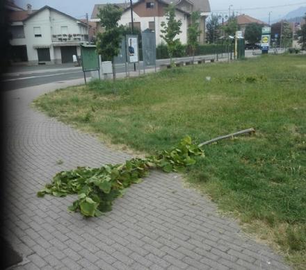 PIOSSASCO - Vandali in azione nel giardinetto tra via Petrarca e via Torino