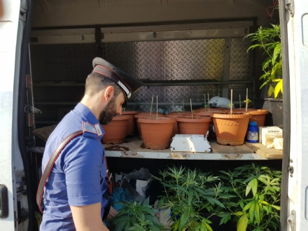 NICHELINO - Un bosco di marijuana nel parco di Stupinigi