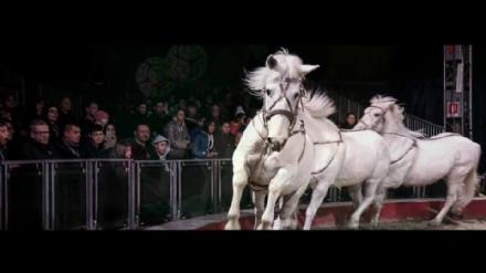 NICHELINO - Scontro tra il Comune ed il circo per lo spettacolo con animali