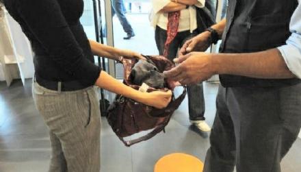 RIVALTA - Cerca di rubare vestiti con una borsa schermata: denunciata