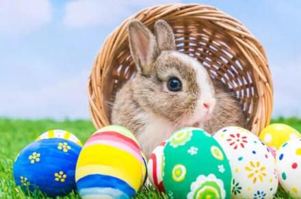 Vivi la tua Pasqua a tempo di convenienza, vieni a scoprire tutte le offerte da Dpiù fino all'11 aprile