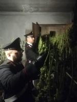 CANDIOLO - La cascina abbandonata trasformata da due albanesi in un laboratorio della marijuana - FOTO e VIDEO - immagine 1