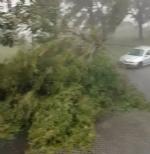 CARMAGNOLA - Tromba daria si abbatte sulla città: danni ingenti - immagine 1