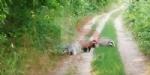 RIVALTA - Lungo il parco del Sangone proliferano i tassi - immagine 1