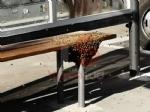 NICHELINO - Uno sciame di api invade la fermata del bus: passeggeri in fuga per evitare punture - FOTO - immagine 1