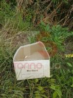 CANDIOLO - Giallo per il ritrovamento di tre gattini uccisi in via Orbassano - immagine 2