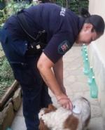 NICHELINO - Mette un collare elettrico al cane per non farlo abbaiare: padrone denunciato dalla polizia locale - immagine 1