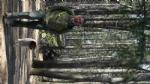 PIOSSASCO - Uccidono i cani con i bocconi avvelenati: caccia ai balordi nel parco del Monte San Giorgio - immagine 1