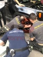 NICHELINO - Il gatto si infila nel cofano della macchina e per liberarlo arrivano vigili e pompieri - immagine 1