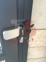 ORBASSANO - Un serpente nel portone: paura in un palazzo di via Della Bassa - immagine 1