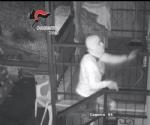 BEINASCO - Furti nelle case: i carabinieri arrestano due ladri - VIDEO - immagine 1