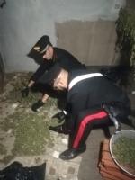CANDIOLO - La cascina abbandonata trasformata da due albanesi in un laboratorio della marijuana - FOTO e VIDEO - immagine 2