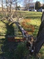 VENTO FORTE - Decine di interventi dei vigili del fuoco: alberi caduti a Nichelino e Beinasco - immagine 2