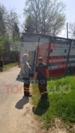 CARMAGNOLA - Camion carico di vitellini finisce fuori strada - FOTO - immagine 2