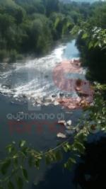 ALLARME AMBIENTALE - Moria di pesci nel Sangone: lo sversamento provocato da un guasto alla rete fognaria - immagine 2