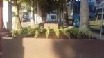 CARMAGNOLA - Le fioriere di piazza IV Martiri diventano orto urbano - immagine 2