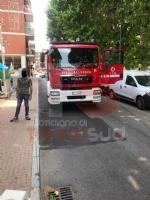 NICHELINO - Il gatto si infila nel cofano della macchina e per liberarlo arrivano vigili e pompieri - immagine 3