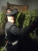 CANDIOLO - La cascina abbandonata trasformata da due albanesi in un laboratorio della marijuana - FOTO e VIDEO - immagine 3