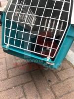 NICHELINO - Il gatto si infila nel cofano della macchina e per liberarlo arrivano vigili e pompieri - immagine 4
