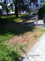 ORBASSANO - «Poca attenzione al Parco Botanico Vanzetti». La denuncia di Italia Viva - immagine 3