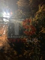 TROFARELLO-CARMAGNOLA - Alberi abbattuti, strade e cantine allagate: nottata di super lavoro per i vigili del fuoco - FOTO - immagine 4