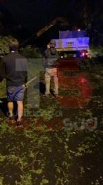 TROFARELLO-CARMAGNOLA - Alberi abbattuti, strade e cantine allagate: nottata di super lavoro per i vigili del fuoco - FOTO - immagine 6