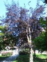 ORBASSANO - «Poca attenzione al Parco Botanico Vanzetti». La denuncia di Italia Viva - immagine 6