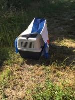 MONCALIERI - Vergognoso abbandono di una gatta con i cuccioli dentro un sacchetto di plastica - immagine 1