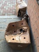 CARMAGNOLA - Criminali abbandonano nella notte cinque cagnolini negli scatoloni - LE FOTO - - immagine 1